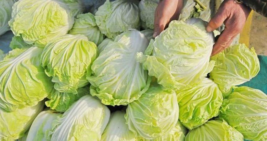 木耳營養價值豐富,每天堅持這樣吃木耳,木耳炒白菜3個天大的好處不請自來