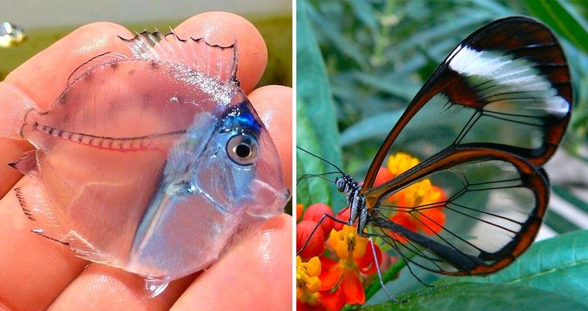 18隻能「跟景色融為一體」的最強無色動物 透明蝸牛連內在都超清楚!