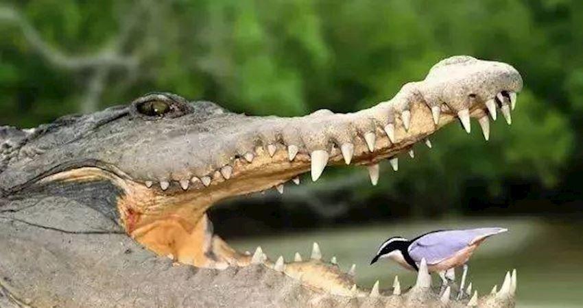 為什麼動物不刷牙,牙齒卻很健康,人類天天刷牙反而有蛀牙?