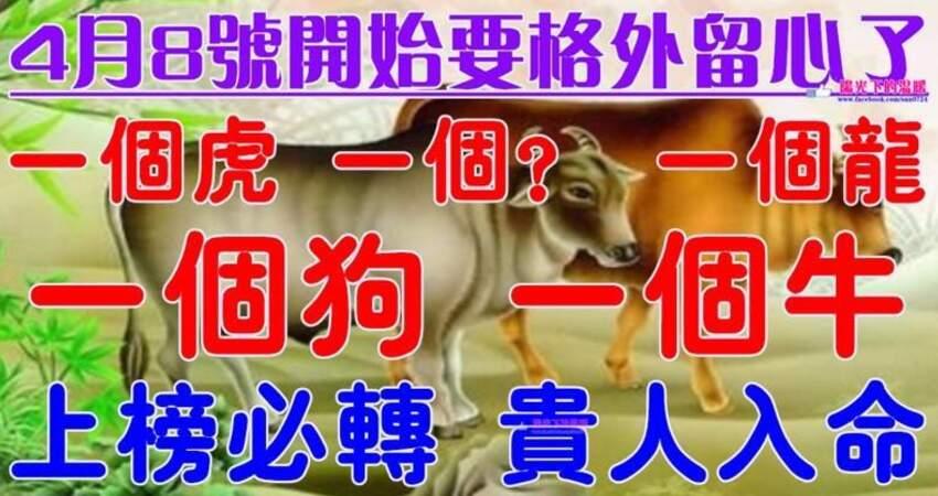 4月8號開始要格外留心了,一個虎,一個?,一個龍,一個狗,一個牛必須轉啊