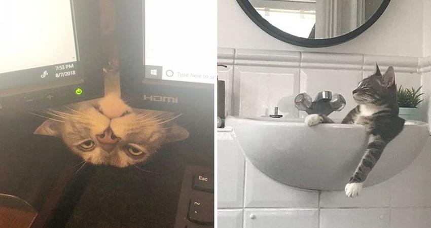 20張證明「貓咪世界毫無邏輯」的照片 牠居然把可愛的寶寶當座騎