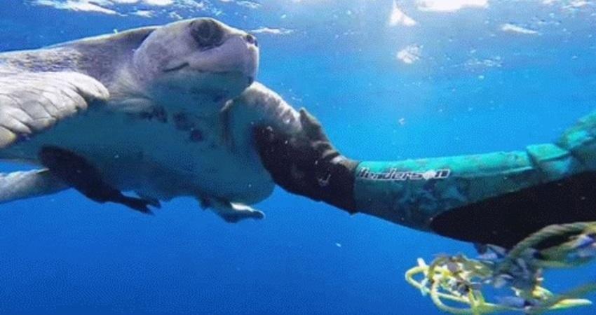 好心男將被困住的海龜救出,當牠獲救後馬上向恩人表達感謝,頓時讓人心暖!