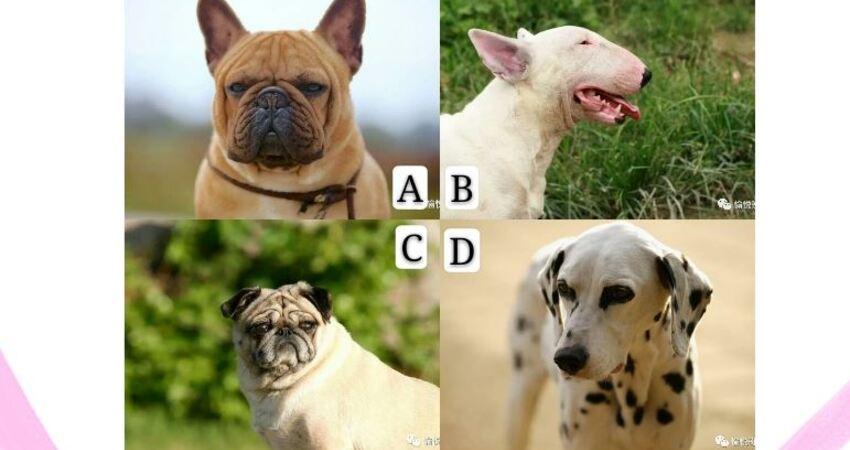 你認為哪隻狗最調皮?測別人在你背後說什麼?
