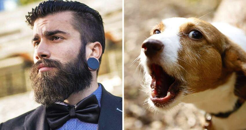 有鬍子的男人很髒? 瑞士研究發現「鬍子裡的細菌比狗身上的還要多」