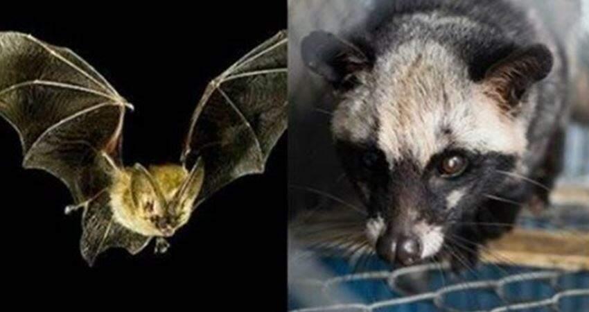 除了蝙蝠,這9大「野味」也不可食用,為了健康請管住嘴!
