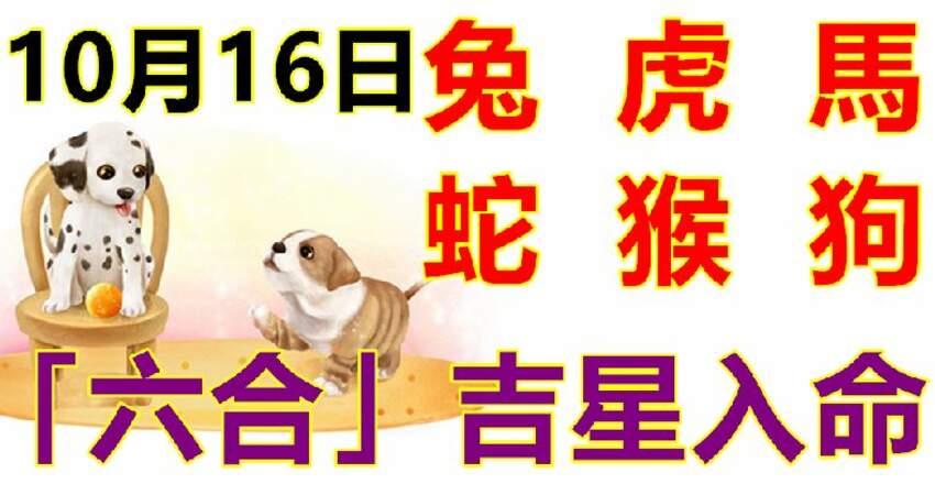 10月16日生肖運勢_兔、虎、馬大吉