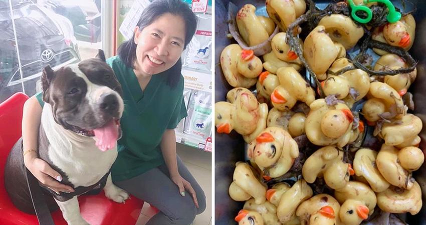 大狗吞「32隻黃色小鴨」急送醫 獸醫警告:拜託不要再買這些玩具給毛孩