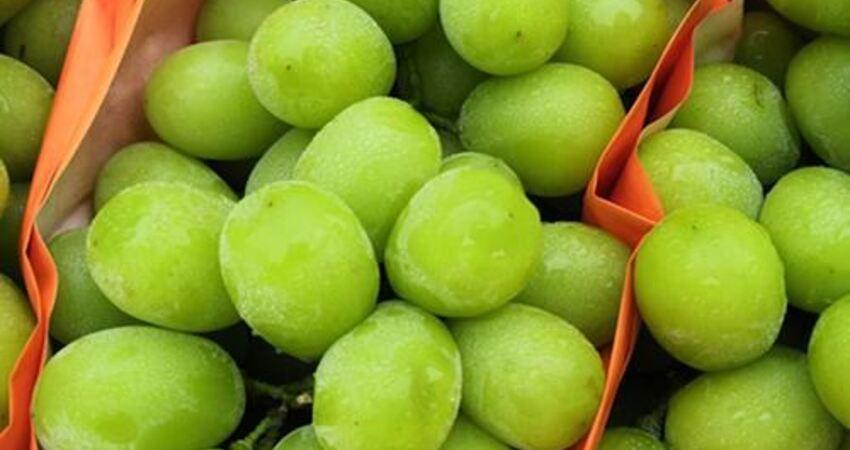 秋季換幾種新鮮水果吃,補鉀補水、維C含量豐富