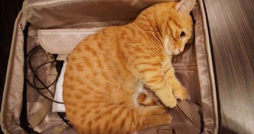 主人收拾行李轉頭見「貓貓自己打包」 乖巧躺入:約好要走一起走~