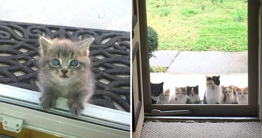 小奶貓趴窗「無辜眼討食」 她好心餵完…隔天站一排:被當Buffet了