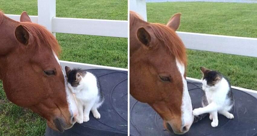 這兩隻太有愛!馬兒從小照顧「迷上吸貓」 貓咪也超黏回蹭:要摸摸~