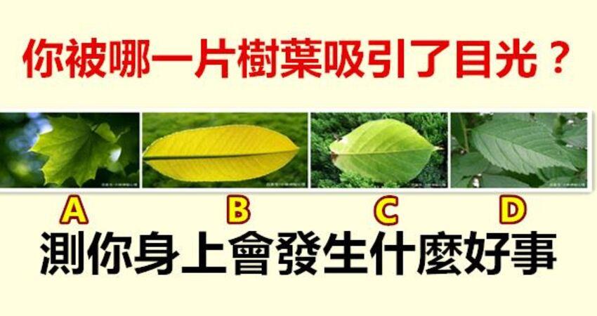 你被哪一片樹葉吸引了目光?測你身上會發生什麼好事