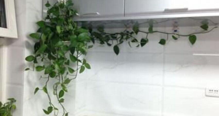 這5種植物適合放在廚房養,不僅能長得旺,還能吸油煙