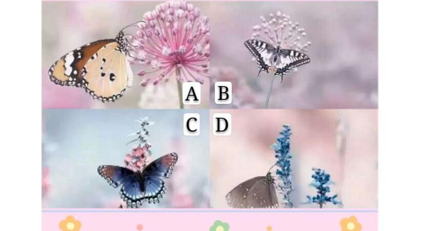 選擇一隻能飛進你心裡的蝴蝶,測你天生什麼命?