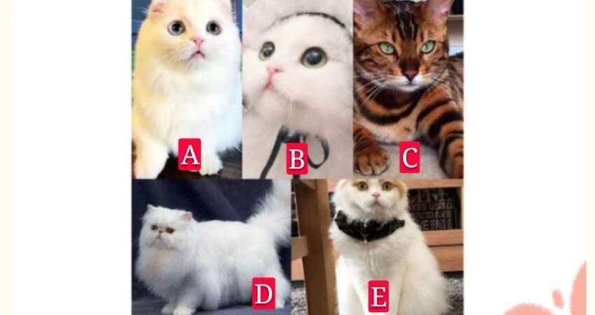 你覺得哪個貓咪最好看,測你在乎的Ta是否真的在乎你?