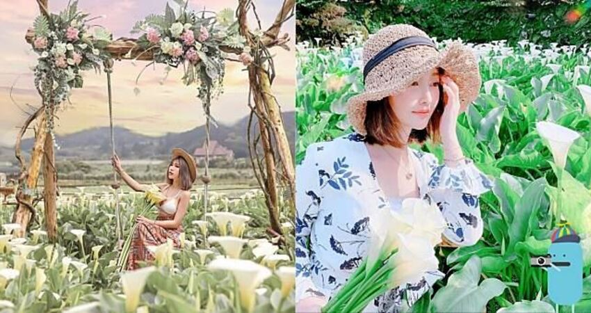 台北景點 名陽匍休閒農莊 化身為小仙女在雪白世界盪鞦韆~
