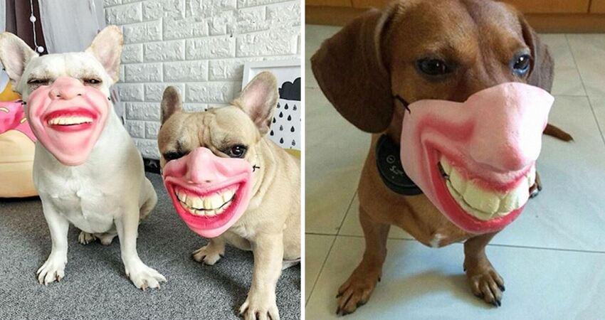 狗狗專屬「創意嘴套」可模仿人類表情 主人邊笑邊拍特寫:很鬧欸~