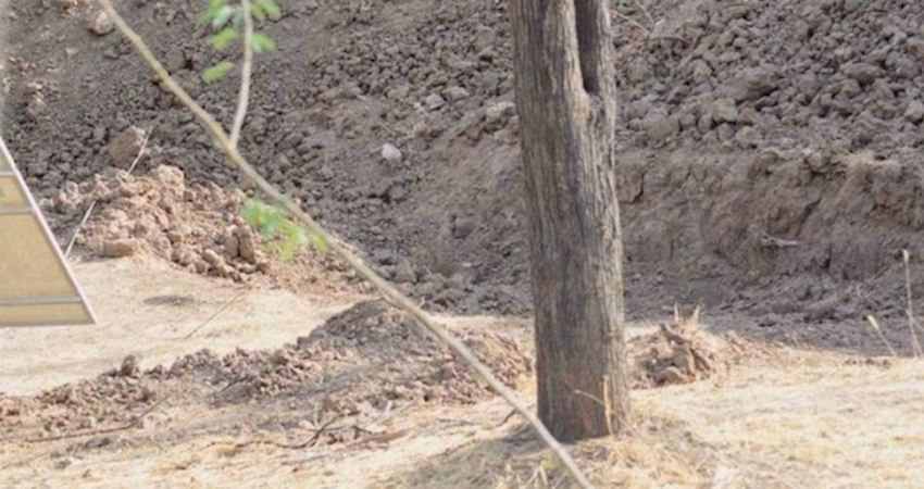 「獵豹在哪裡」圖片讓網友都找到要生氣 眼力好的人:我已經找到了