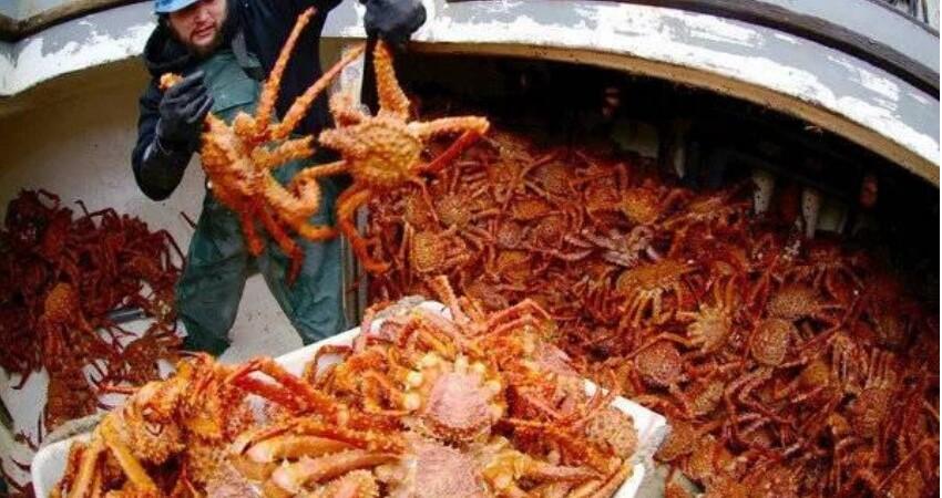 阿拉斯加捕蟹人,捕撈帝王蟹,據說是世上高危職業之一