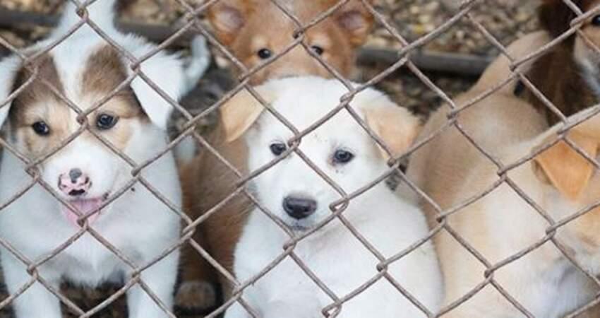 禁賣繁殖工廠寵物! 美國加州推新規定:寵物店只能賣獲救動物