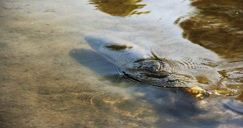 人挖一個池塘能「長」出魚嗎?這部紀錄片拍攝到這個神奇的過程