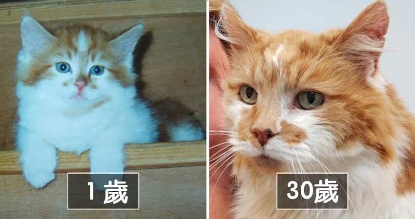 世界最老貓咪! 牠即將慶祝「32歲生日」:長壽秘訣是主人給的愛
