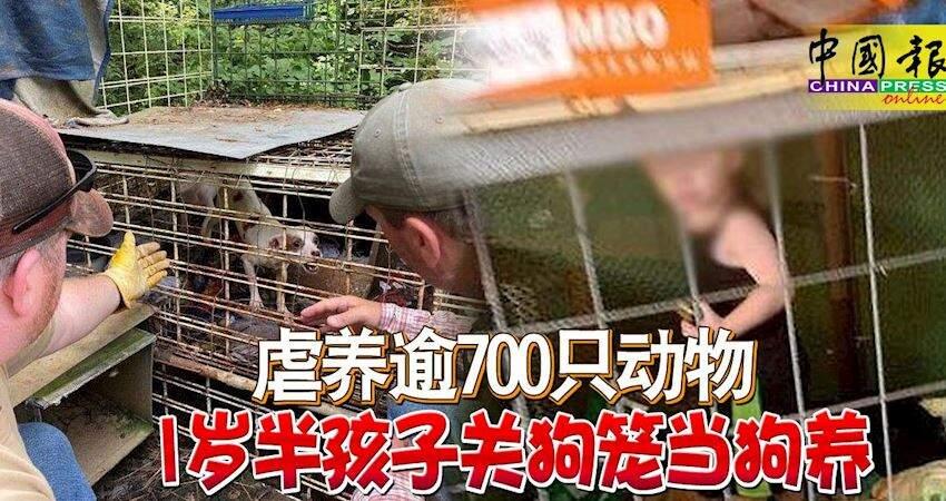 虐養逾700隻動物1歲半孩子關狗籠當狗養