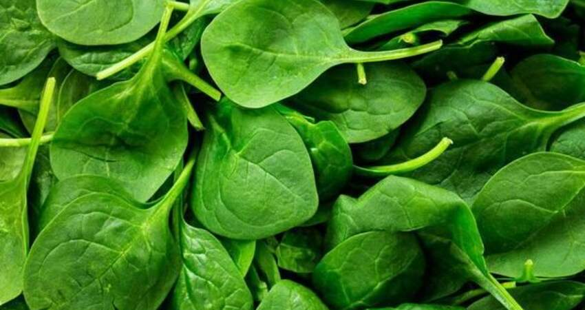 血栓最怕的3種蔬菜,每天吃一種,清理血液垃圾,血管不堵無栓
