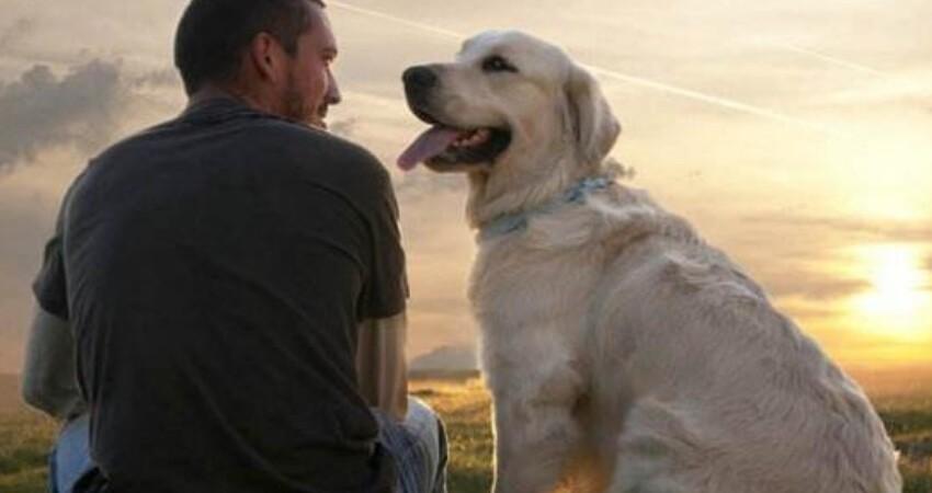 美國夫婦的哈士奇走丟了,尋找無果,9天后使出殺手鐧狗狗回來了