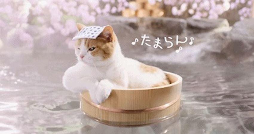 冬日裡治癒系「貓浴場」,進入還需要貓咪護照,太可愛了