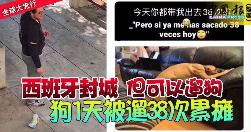 西班牙封城但可以遛狗。。。狗1天被遛38次累癱還有人遛起了玩具狗