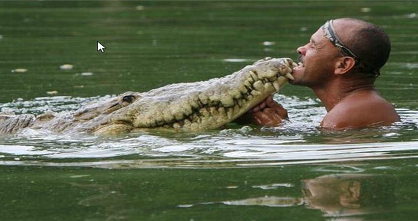 他順手救了「大鱷魚」回家照顧 放生隔天「家門出現最熟悉黑影」