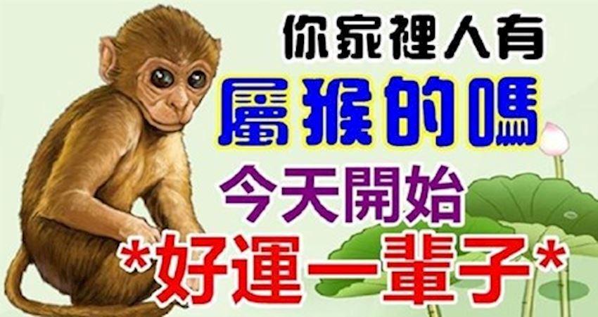 你家裡人有屬猴的嗎,今天開始*好運一輩子*屬猴的都注意一下吧