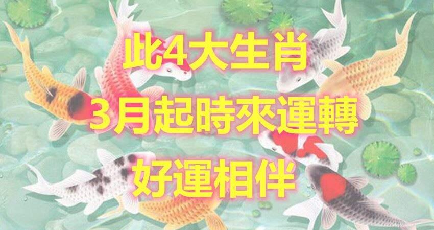 3月,時來運轉的4大生肖【豬猴馬狗】