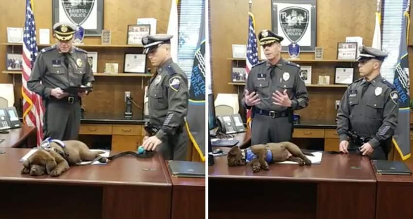 超Q小警犬「就職典禮」甜睡整場 警察演講「牠還換睡姿」:人家真的很早起嘛~