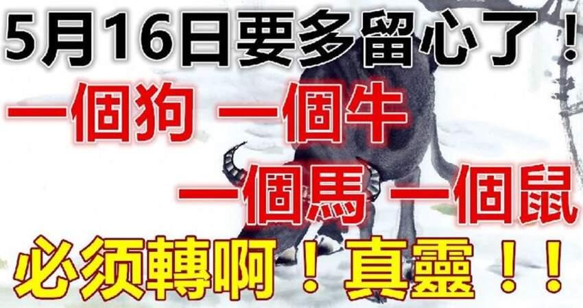 5月16日要多留心了,一個狗,一個牛,一個馬,一個鼠,必轉