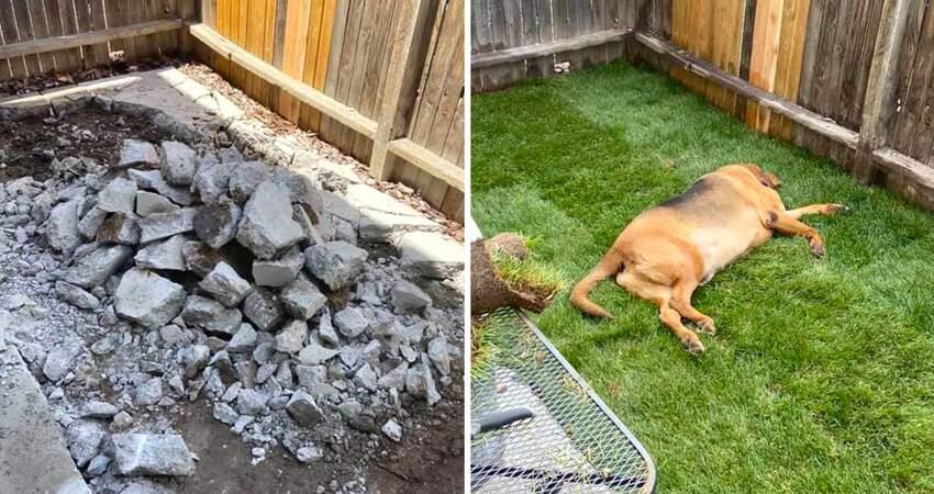 54kg大汪「遭退貨4次」沒被寵過 貼心爸媽幫改造露台:狗生首次有自己的草皮~