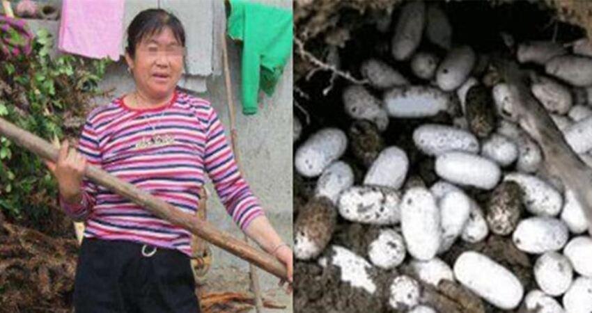 寡婦砍柴,撿一窩蛇蛋,孵化後放生,隔天蛇群湧進家中,驚喜來了!