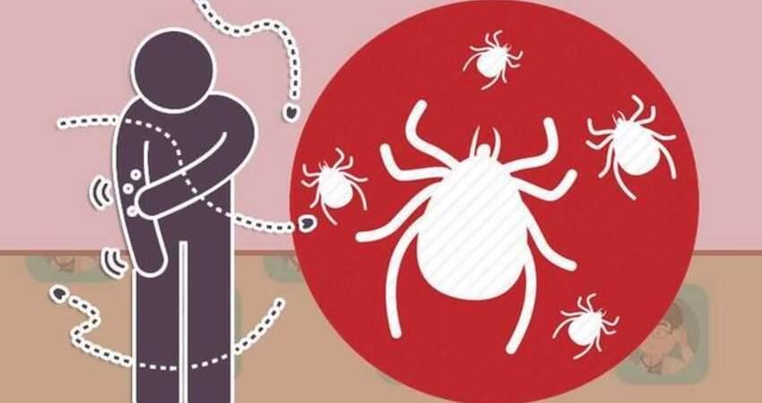 這種蟲夏季最活躍,能奪人性命!醫生提醒:被叮咬後千萬硬拽!