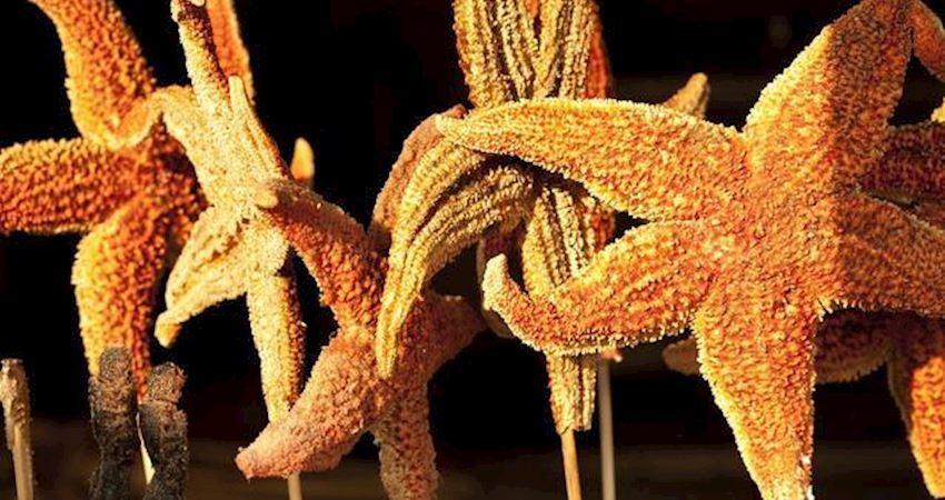 油炸海星什麼味兒?多人品嘗後,竟變成了一個不能提的梗?
