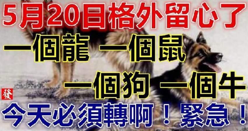 5月20日要格外留心了,一個龍,一個鼠,一個狗,一個牛必須轉啊