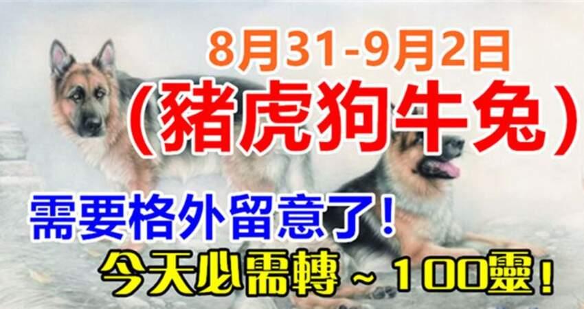 8月31-9月2日(豬虎狗牛兔)需要格外留意了,今天必須轉