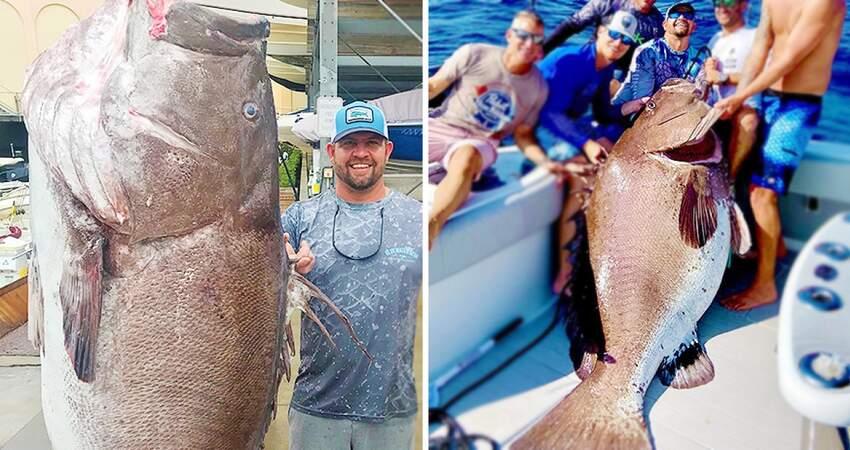 只用魚線和釣鉤!狂男捕獲「158公斤大石斑」 專家驚:牠至少50歲