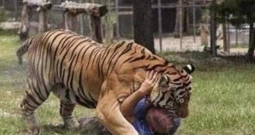為啥老虎吃了人,就一定得殺掉,專家說出原因,可怕至極