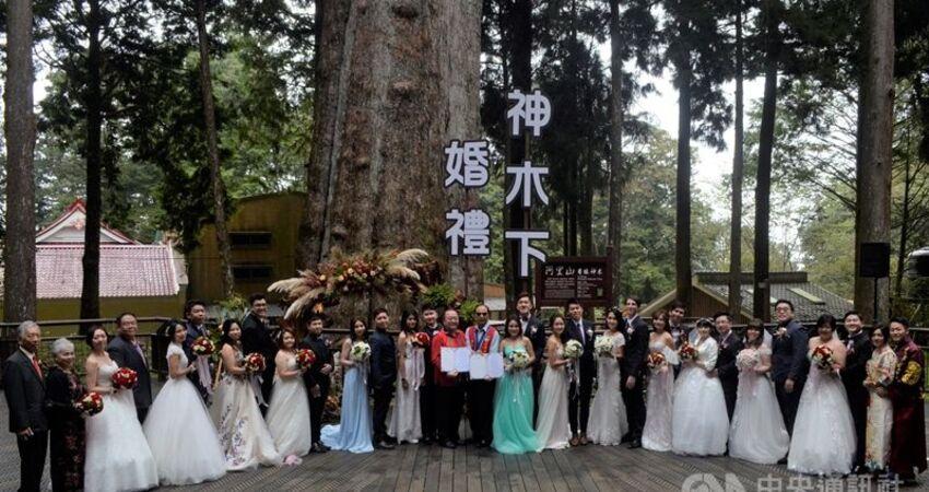阿里山神木下見證婚禮 結縭43年夫妻圓蜜月夢
