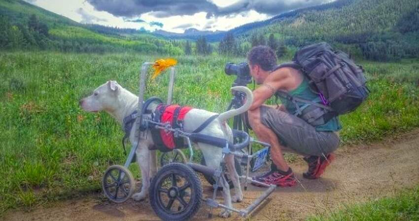 狗生很豐富!暖爸為「跛腳汪」準備輪椅 牠不求幫助跟著跑遍整個國家♡