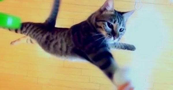 主人將玩具老鼠掛在196公分的高度看看愛貓能否跳到那麼高