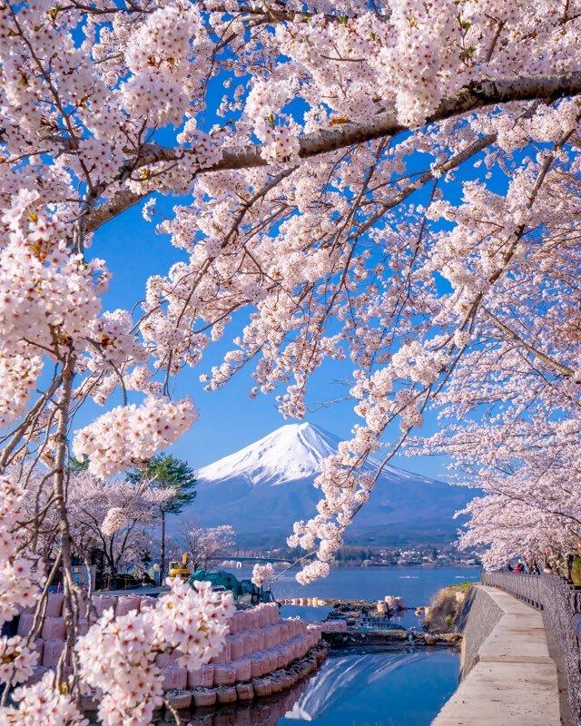 Mùa sakura Nhật Bản qua ống kính của một nhiếp ảnh gia.6