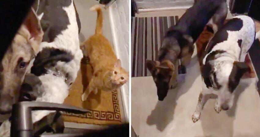 到底是誰在亂敲門? 他一打開門…「1貓2狗」闖進來:就決定這裡是新家了
