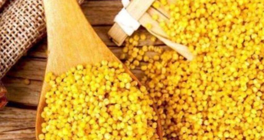 老人頓頓吃小米,身體會更好?營養師勸告:合理搭配才是關鍵
